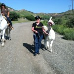 Ann walking Cesar's rescued Llama out at the Dog Psychology Ranch - using a dog Halti collar!