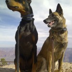 Diesel and Bella - Grand Canyon. It was a looooong ride in the RV but SO worth it!