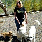 Ann with the singer Pink's dogs (she wants to steal the little guy on the left....Bubba, but loves Nonnie and Bailey too!)