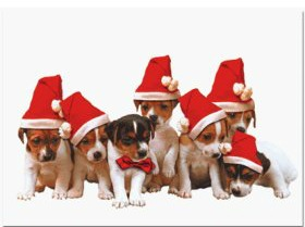getting a puppy for christmas | A Tail Above Dog Training