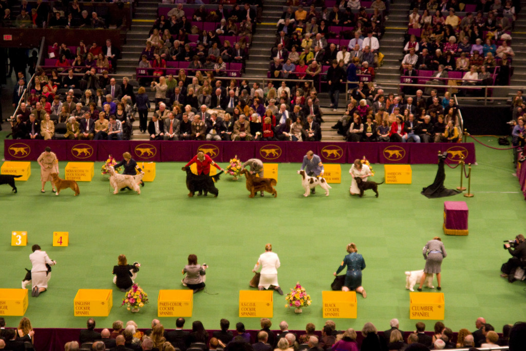 westminster dog show | A Tail Above Dog Training